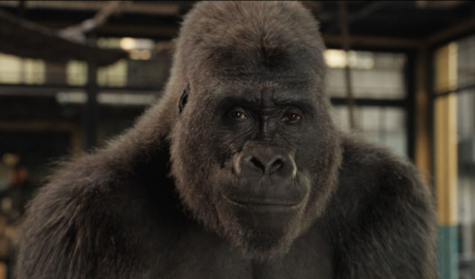 Still photo of Ivan the gorilla from Disney's The One and Only Ivan.